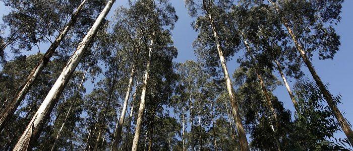 nanotecnologia no desenvolvimento de fertilizantes em pesquisa da Embrapa Florestas