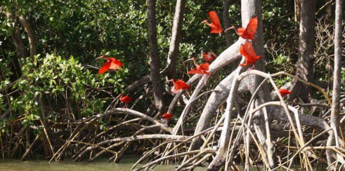 Manguezais e a importância do bioma para o ecossistema